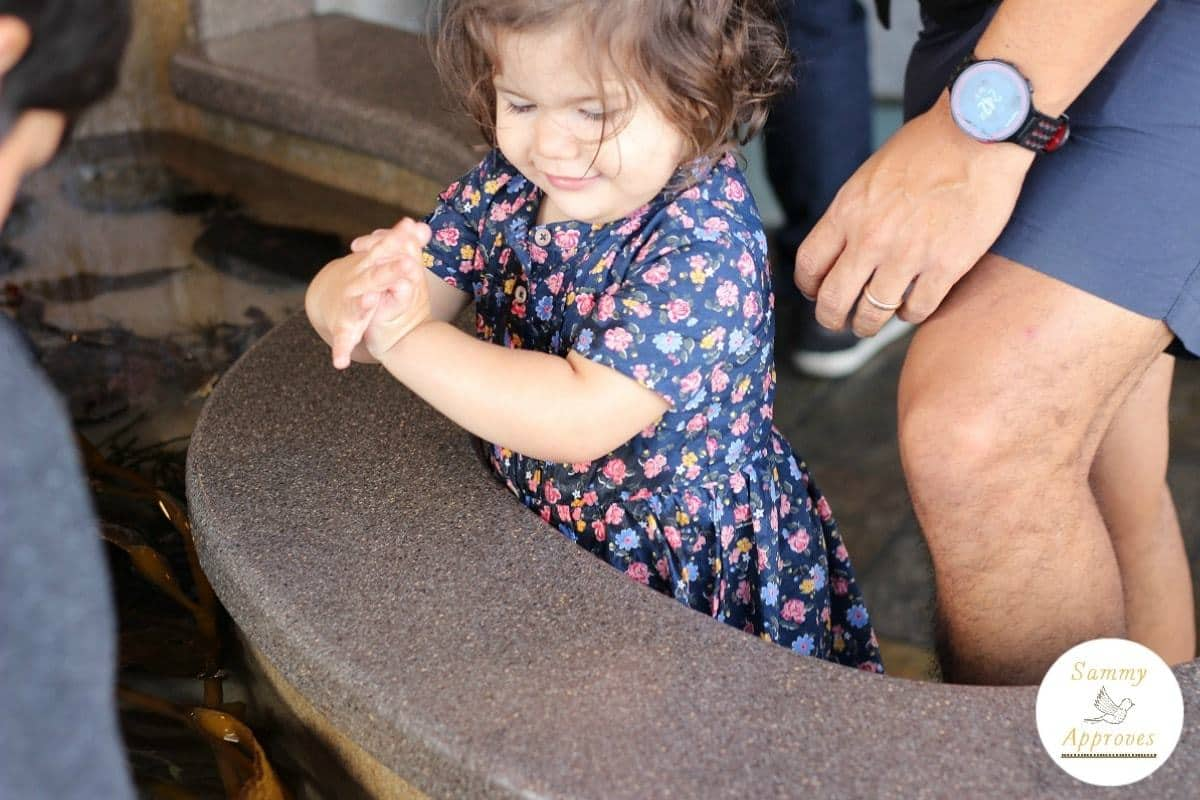 Fun Toddler Exploration- Monterey Bay Aquarium