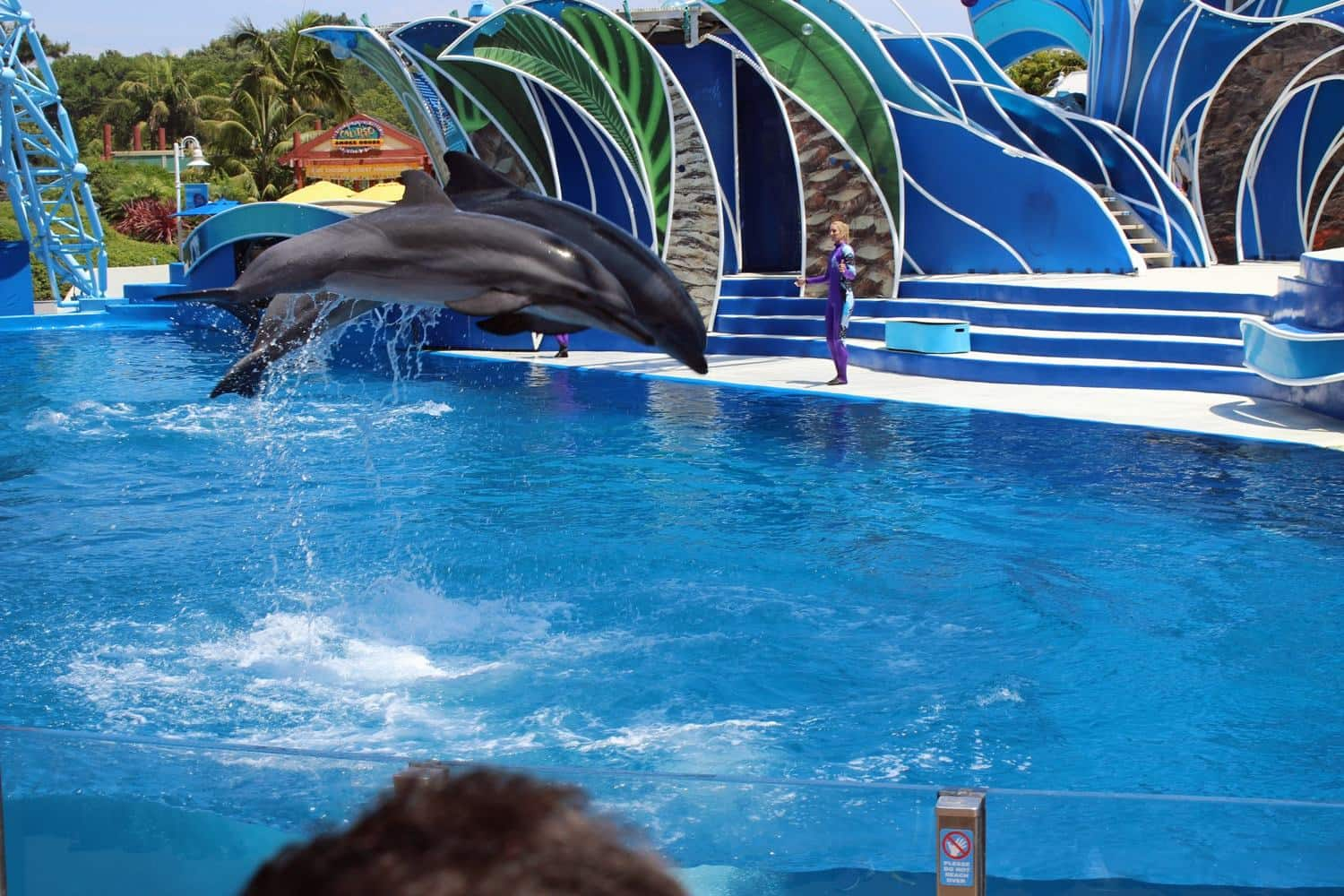 6 Planning Tips for the Best Family Vacation at Sea World San Diego