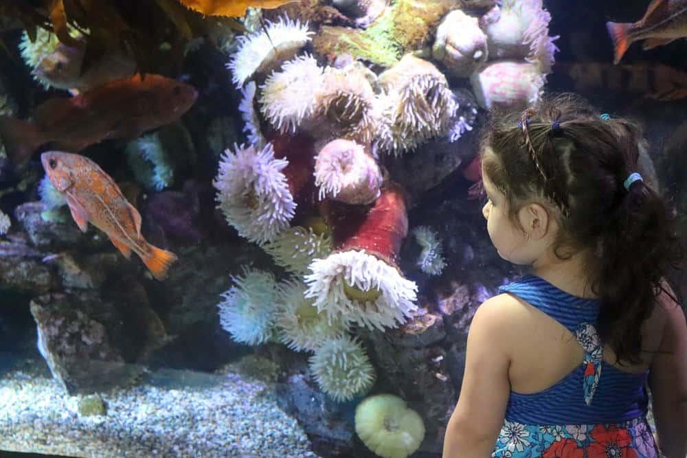 Family Fun California Day Trip   Aquarium of the Pacific Long Beach