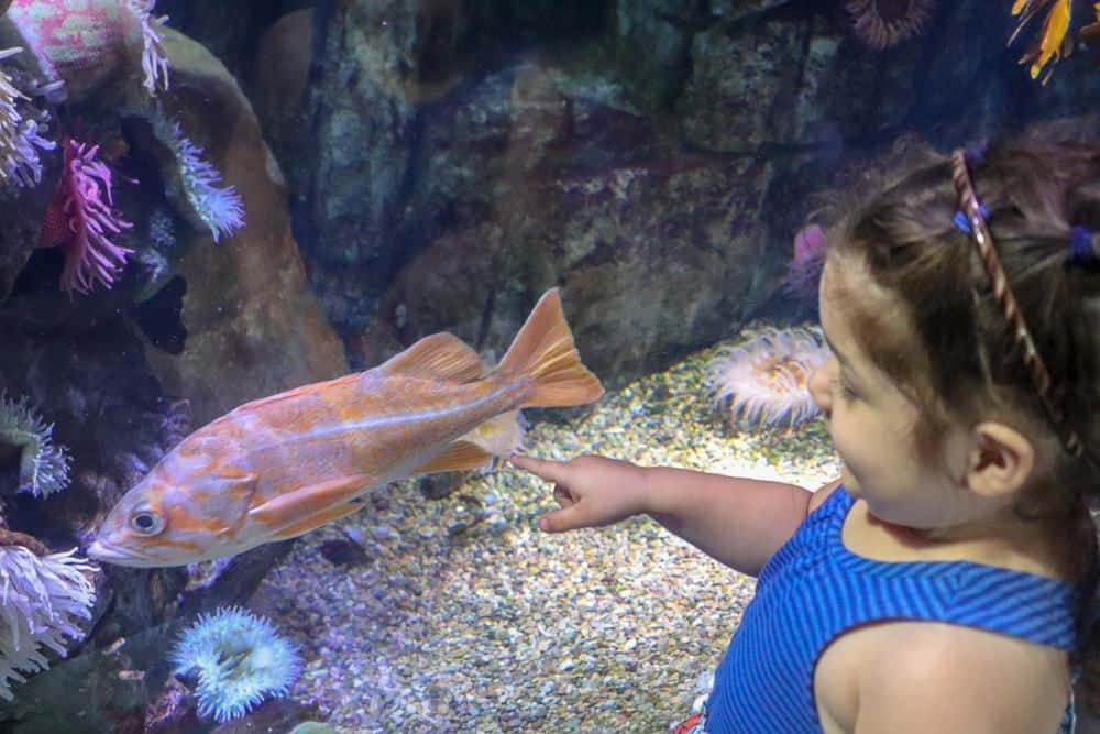 Family Fun California Day Trip | Aquarium of the Pacific Long Beach